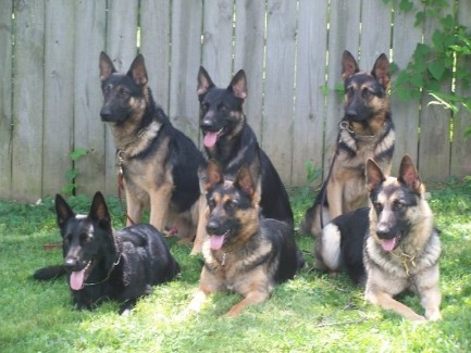 Choosing The Right Breed Of Dog What Breed Of Dog Is Right How To